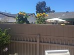 New privacy fence with sunflowers peeking over