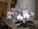 La cheminée et ses Orchidées
