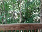 Forest view from the end of the deck- very private!