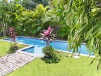 Pool,Water,Palm Tree,Tree,Yard