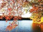 Always beautiful pond