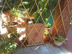 esterno cucina- cortile