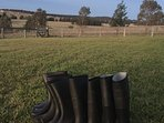 Our guest gumboots for strolling in the paddocks.