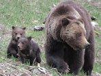 Yellowstone wonders