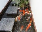 Koi fish & turtle pond