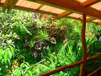 Lush tropical landscaping off the back lanai