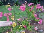 jardin coté cour