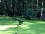 Shelby Forest State Park - Canoe Swamp Tour