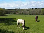 Ponies grazing all over New Forest