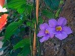 esterno - dettaglio fiori