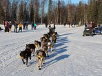 Iditarod Race on Crystal Lake, OUR BACKYARD! Iditarod & Snowmachine packages available!