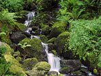 Wooded grounds with a small stream at this north Wales holiday cottage