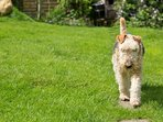 Dolgellau holiday cottage - pet welcome