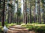 Arnold Rim Trail