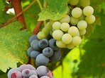 Taste wine at the myriad of wineries on and off Main Street in M
