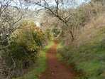 Trail to Natural Bridges in Murphys