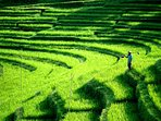 Bali and its gorgeous terrace rice fields: take a big breath!
