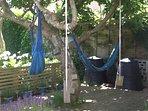 hammocks and swings in the magnolia tree