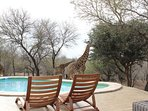 More guests at the private pool
