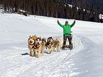 Enjoy a unique dog sledding adventure!
