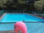 the flamingo invites you to pool!