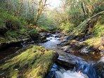 River Faughan