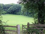 The surrounding fields are a haven for wildlife - spot the Roe deer