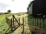 Our Shepherd's Hut, tucked away in one of our fields.