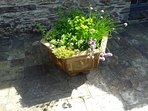 Pot planted with herbs for your use