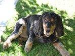Lexie ,la mascotte de la maison,un amour de chienne.