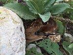 Bambi Sleeping behind the Pool