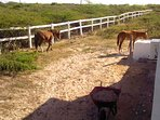 Horses wander in and out of the yard