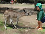 Feed the kangaroos next door at Currumbin Wildlife Sanctuary