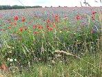 Wild flower meadow on the estuary