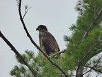 Eagles, hawks and birds for bird watching, bird watchers