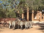 Some of our wildlife visitors to Chipembere Bush Lodge