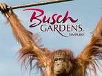 Only 15 to 20 mins away from Busch Gardens.