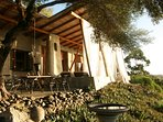 patio/outdoor dining beneath old olive tree