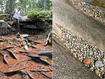 Great Wass's colorful trails are studded with sculptural granite rock formations.