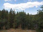 Fir,Tree,Forest,Vegetation,Outdoors
