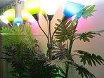 Abajur com lâmpadas coloridas proporcionam um visual extremamente lindo de plantas verdes