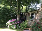 Summer 2016 back garden