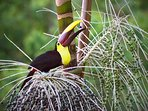 Toucans eating breakfast on the property.