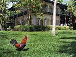 Hemingway House is a short stroll