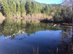 One of the ponds on the 100 acre ranch with many walking trails to explore