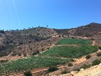 View of the hillside vineyard along our private driveway up to the main villa
