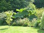 un petit air exotique et zen  flotte sur notre jardin en août 2016 !