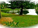 View Norfolk Island Pine and lake from your screened lanai and patio