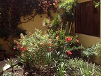 Courtyard  garden with Fuschias