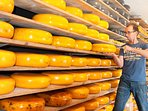 Our Cheese production at the farm. We are one of 100 farmers left in the Netherlands making Gouda